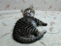 O gatinho pequeno bonito acordou Fotos de Stock