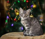 O gatinho pequeno bonito do gato malhado senta-se olhando a câmera em um fundo festivo Imagem de Stock