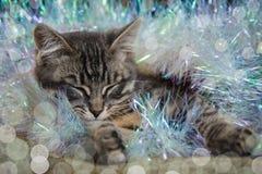 O gatinho pequeno bonito está dormindo envolveu em uma decoração do Natal Fotos de Stock