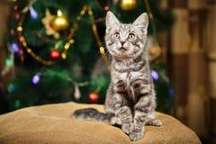 O gatinho pequeno bonito está olhando acima em um fundo festivo Imagens de Stock Royalty Free