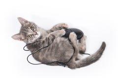 O gatinho pequeno bonito joga com o rato do computador Imagem de Stock Royalty Free