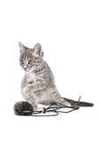 O gatinho pequeno bonito joga com o rato do computador Imagens de Stock Royalty Free