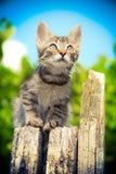 O gatinho pequeno bonito senta-se no céu de madeira do coto e do olhar exterior Imagens de Stock Royalty Free