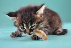 O gatinho pequeno come um peixe Imagens de Stock Royalty Free
