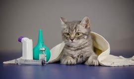O gatinho pequeno é doente, gatinho do tratamento Imagens de Stock Royalty Free