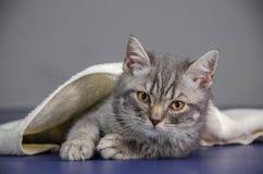 O gatinho pequeno é doente, gatinho do tratamento Imagem de Stock Royalty Free