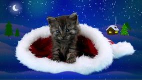 O gatinho pequeno muito bonito põe maciamente sua pata, sentando-se no chapéu de Santa Claus video estoque