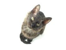 O gatinho preto pequeno Foto de Stock Royalty Free