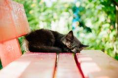 O gatinho preto pequeno no banco fotos de stock