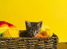 O gatinho senta-se em uma cesta com as bolas das lãs O bordado favorito é um passatempo imagens de stock