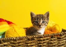O gatinho senta-se em uma cesta com as bolas das lãs O bordado favorito é um passatempo foto de stock