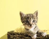 O gatinho senta-se em uma cesta com as bolas das lãs O bordado favorito é um passatempo imagem de stock