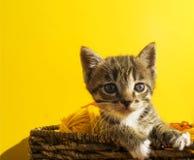 O gatinho senta-se em uma cesta com as bolas das lãs O bordado favorito é um passatempo fotografia de stock royalty free