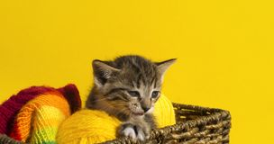 O gatinho senta-se em uma cesta com as bolas das lãs O bordado favorito é um passatempo fotografia de stock