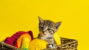 O gatinho senta-se em uma cesta com as bolas das lãs O bordado favorito é um passatempo imagens de stock royalty free