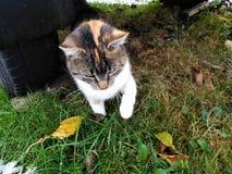 O gatinho sob o reboque na grama da neve Fotografia de Stock