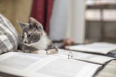 O gatinho tricolor engraçado, bonito estabelece para descansar em um dobrador com as folhas de papel imagem de stock royalty free