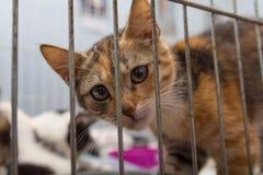 O gatinho vermelho em uma gaiola chega no abrigo imagens de stock