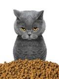 O gato é com fome e indo comer Imagem de Stock Royalty Free
