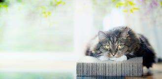 O gato é descansar acolhedor no vadio no fundo da janela e da natureza fotografia de stock