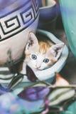 O gato ? muito bonito no jardim fotografia de stock royalty free