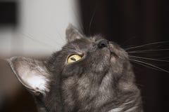 O gato é um animal da família dos felines imagens de stock