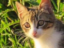 O gato Imagens de Stock Royalty Free