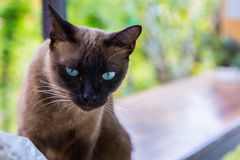 O gato Foto de Stock Royalty Free