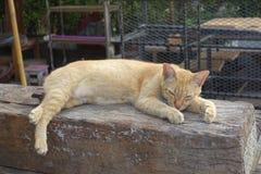 O gato alaranjado está dormindo no ar livre Imagens de Stock