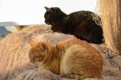 O gato amarelo e o gato preto estão dormindo na rede de pesca fotos de stock royalty free