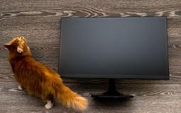 O gato ao lado do monitor na frente da árvore foto de stock