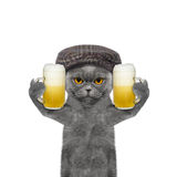 O gato bebe a cerveja e o cumprimento alguém Fotos de Stock