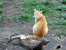 O gato bonito do ruivo senta-se ao lado da grama verde e da madeira do coto imagem de stock royalty free