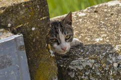 O gato bonito encontra-se para baixo no concreto O gato pregui?oso senta-se em concreto Retrato do gato na terra imagem de stock royalty free