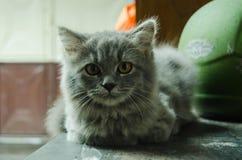 O gato bonito está frio devido à chuva imagens de stock