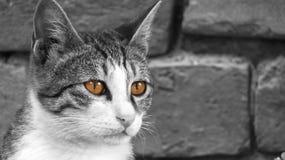 O gato bonito está olhando sua caça fotografia de stock royalty free