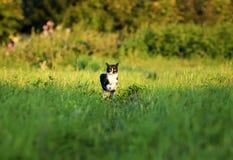 o gato bonito novo é alegremente e corre rapidamente ao longo de um gre imagem de stock royalty free