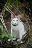 O gato bonito senta-se no jardim Imagens de Stock Royalty Free