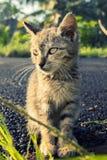 O gato bonito senta-se para baixo na estrada Fotos de Stock