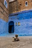 O gato bonito, sentando-se no medina de chefchaouen, Marrocos, Norte de África Gato que lambe seu auto na rua Gato marroquino cin fotos de stock