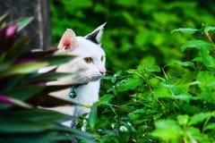 O gato branco Imagem de Stock Royalty Free