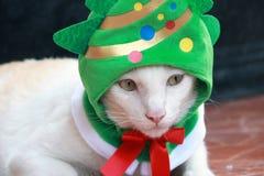 O gato branco do close up pôs a capa verde da árvore de Natal e o estabelecimento sobre o assoalho marrom imagens de stock royalty free