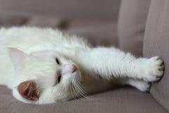 O gato branco dorme no sofá imagem de stock