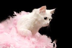 O gato branco joga penas cor-de-rosa Foto de Stock