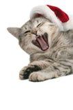 O gato cinzento boceja próximo a um tampão de ano novo Imagem de Stock Royalty Free