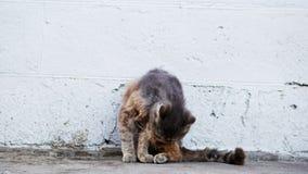 O gato cinzento desabrigado lambe lãs, infeliz e sujo doentes na rua vídeos de arquivo