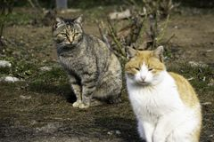 O gato cinzento e o gato do gengibre sentam-se no gramado fotografia de stock royalty free