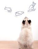 O gato com fome novo está sonhando sobre comer Foto de Stock