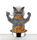 O gato come com uma colher de uma bacia Imagens de Stock