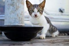 O gato come o alimento imagens de stock royalty free